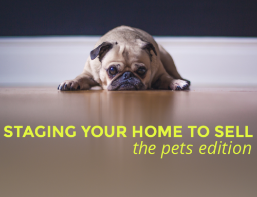 STAGING YOUR HOME TO SELL *WITH PETS EDITION*