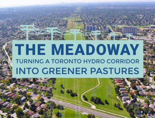 THE MEADOWAY: TURNING A TORONTO HYDRO CORRIDOR INTO GREENER PASTURES