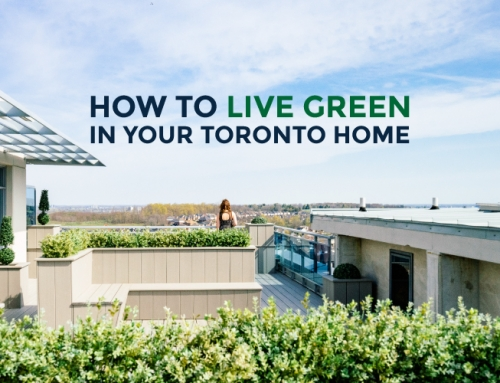 HOW TO LIVE GREEN IN YOUR TORONTO HOME