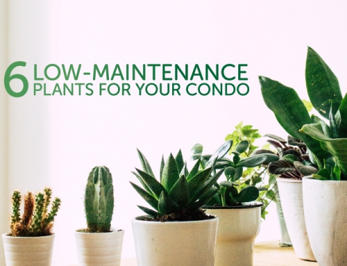 6 LOW-MAINTENANCE PLANTS FOR YOUR CONDO