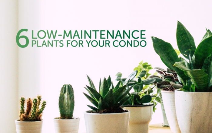 low-maintenance plants for your condo