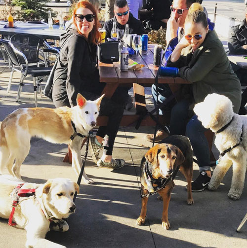 dogs on the Dundas and Carlaw patio