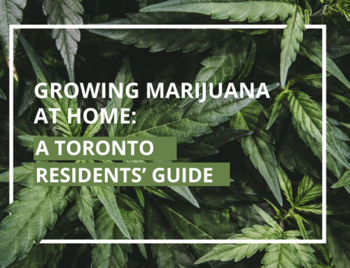GROWING MARIJUANA AT HOME: A TORONTO RESIDENTS' GUIDE